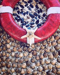 "superKinder 🇷🇴🇬🇧 on Instagram: ""🐚🐚🐚 #shellwall #shell #seaside #restaurant #seastar #lifeline #summer #travel #travelgram #instago #constanta #mangalia #instasummer #nice…"" Seaside Restaurant, Summer Travel, Shell, Nice, Instagram, Nice France, Conch, Bookshelves, Seashells"