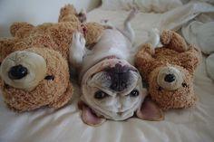 3 little bears.