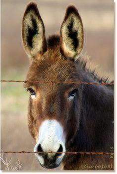 God's precious Donkey