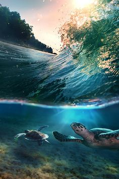 Tropical paradise with turtles by Vitaliy Sokol