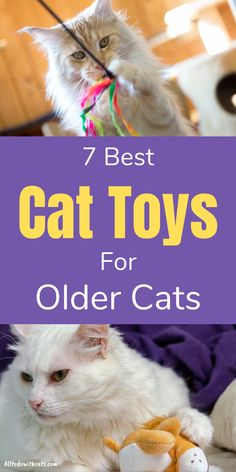 Discover 7 best cat toys for older cats that your kitty will love. Seniors may not have the boundless energy of kittens but still need play and exercise. These toys are great for mental stimulation and gentle exercise to help maintain good health. Human Babies, Fur Babies, Training A Kitten, Cat Behavior Problems, First Time Cat Owner, Best Cat Food, Cat Care Tips, Cat Tunnel, Catnip Toys
