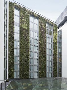 Living Wall at Mint Hotel Tower of London