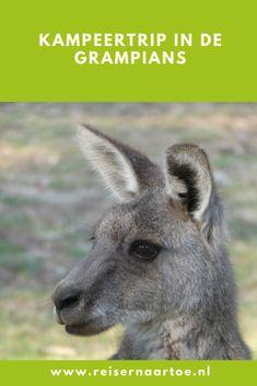 Kampeertrip in de Grampians - Reis ernaartoe Kangaroo, Animals, Rice, Baby Bjorn, Animales, Animaux, Animal, Animais