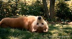 hachiko dog   Hachiko: A Dog's Story (2009) part [2/3]