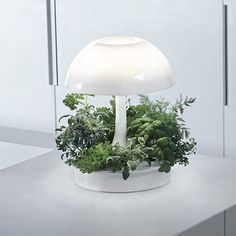 Ambienta Accent Furniture, Decoration, Terrarium, Table Lamp, Lighting, Home Decor, Life, Decor, Terrariums