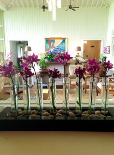 A Simple But Pretty Orchid Display At Kukuiula In Kauai