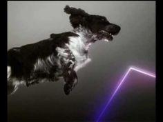 "Legendaric Vitalic Dog Clip <3 with ""Birds"""
