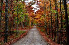A northern Michigan back road