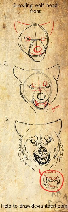 wolf/dog head tutorial nr.10 (growling, front) by CasArtss