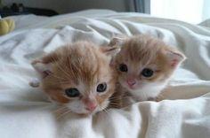 so cute!!! #cat