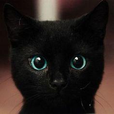 interesting eyes on this kitten