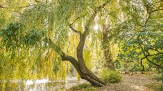 Take a two minute break, slow down and gently breathe to two minute moments of springtime natural beauty and calm in the Garden. The Shining, Mental Health Awareness, Tree Of Life, Botanical Gardens, Breathe, Natural Beauty, Trees, Mindfulness, Calm