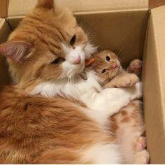 Cute & Cats —  Source: http://ift.tt/2l5F8aY