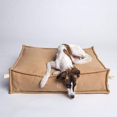Do I have to get off this Cloud7 Cozy dog bed? #dogs #dog #puppy #pup