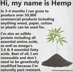 My name is Hemp and I also treat the soil in which I grow, and could be planted in between other crops solely for that 'healing the soil' purpose. At your service 🙏🏻 hemp power earthmedicine treating healing gaia conscious farmer farming naturalista Marijuana Facts, Medical Marijuana, Weed Facts, Ganja, The More You Know, Good To Know, Save Our Earth, Endocannabinoid System, Alzheimer