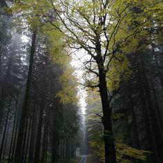 podzim, Lísek... Photo And Video, Videos, Plants, Instagram, Plant, Planets