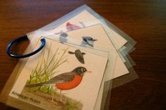 bird watching kit - extend into guides for natural world as seen/experienced from a location (school, home...)