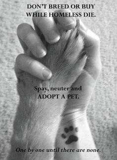 ♥☺ ReLove Plan.et ☺♥: ☆ What's Going On: Pets; making Responsible Choices! ☆
