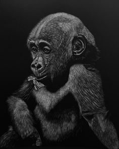 Scratchboard Art, Zimmerman, Wildlife, Artist, Animals, Animales, Animaux, Animal Memes, Animal