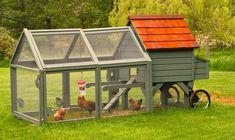 Empresa afirma que 'galinheiro móvel' também é um aliado para fertilizar o solo (Foto: Dean Fosdick/AP)