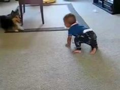 Hilarious to watch as this  dog and baby play - they're both having so much fun!