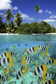 Gotas de Mel Turismo | Lua de Mel no Tahiti