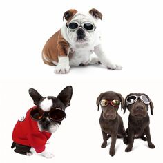 Luxury for dogs Dog Goggles! Dog Goggles, I Love Dogs, Your Pet, French Bulldog, Puppies, Pets, Animals, Luxury, Animals And Pets