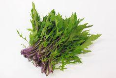「紅法師(水菜)」 葉柄が鮮やかな赤紫色の早生系の水菜・紅法師(べにほうし)です。 この赤紫色にはポリフェノールの一種であるアントシアニンを多く含んでいるので、機能性水菜とも言われています。  一般的な水菜より小さく、丈は20センチほどで茎は少し太いです。 シャキシャキ感もありながら、やわらかな食感でクセもありません。 サラダなどの生食がオススメです。
