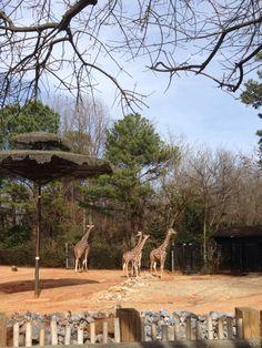 Atlanta zoo coupons