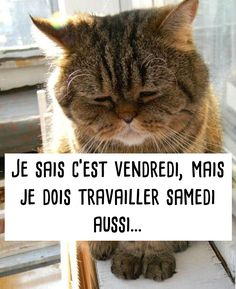 Trop Chou, Citations, Animaux, Chats Adorables, Humour