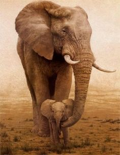 Mother/baby elephants