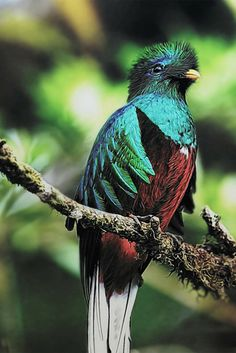 The quetzal is what the money in Guatemala is called. It's out national bird