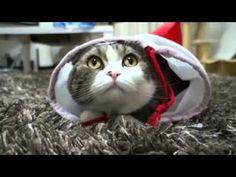 Кинозал сайта infoportal.lv - Рижский портал бесплатных объявлений Cute Kitten Gif, Cat Gif, Kittens Cutest, Cute Cats, Funny Cats, I Am Back, Funny Cat Videos, Make Me Smile, Animals