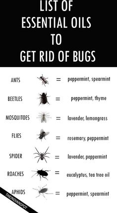 Oils to Get Rid of Bugs                                                                                                                                                                                 More