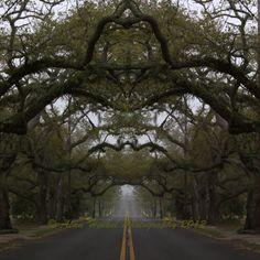 Dreamy Oak Tree Pascagoula Street Mississippi Photo by BridgetBlue, $36.00