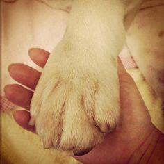 fatty's hand #bulldog