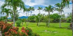 Amazing garden in Hacienda Colibrí - La Guácima - Costa Rica http://lxcostarica.com/property/hacienda-colibri