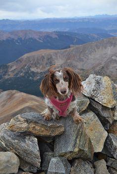 Dachshund On Vacation Weenie Dogs Sausage Dog Dachshund Love