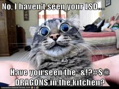 Dragons?? no i didn't