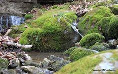 Mossy Rocks. Lost Valley Trail. Via ExploringNWArkansas.com