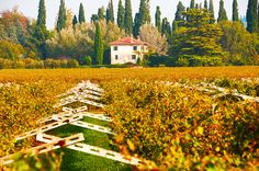 Around the World in 18 Wines - Valpolicella, Italy  The Valpolicella wine region is located just outside the city of Verona.