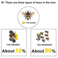 Bee World | Interesting Fun Facts About Honey and Honey Bees