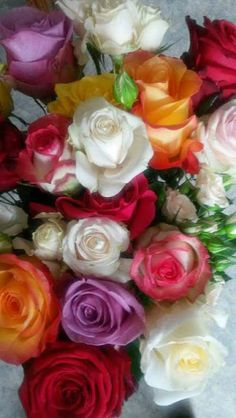 Mixed of colorful roses