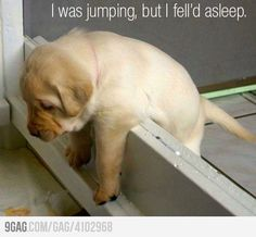 I feel like this every Thursday...it's almost Friday! #puppy #funny