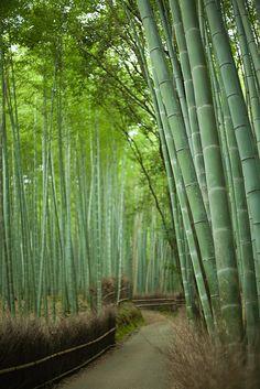 Inviting bamboo path of rural Japan Sagano Bamboo Forest, Kyoto, Japan