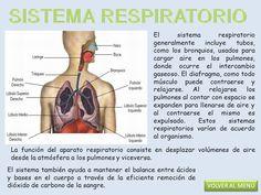 20 Ideas De Cuerpo Humano Recursos Cuerpo Humano Cuerpo Sistemas Del Cuerpo Humano