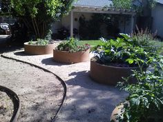 Concrete sewer pipe sections for veg garden planters. Can be stained, stucco'd or faced with stone or tile or???