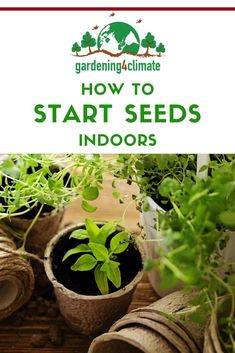 Seed starting is one of the essential skills for every gardener. Here are 10 tips to make indoor seed starting a success! Home Grown Vegetables, Planting Vegetables, Organic Vegetables, Growing Vegetables, Vegetable Gardening, Starting Vegetable Seeds, Starting Seeds Indoors, Seed Starting, Gardening For Beginners