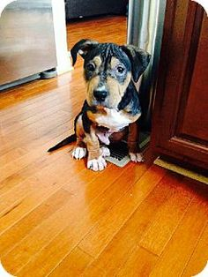 Adoptable Dog Jax Va