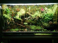 Reptile House, Reptile Cage, Vivarium, Danger Noodle, Terrarium Reptile, Aquarium Landscape, Crested Gecko, Tropical, Moss Garden